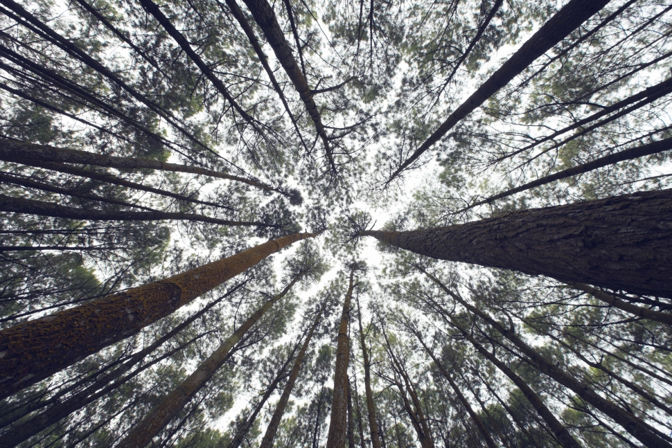 Niets in de natuur groeit kleiner ..