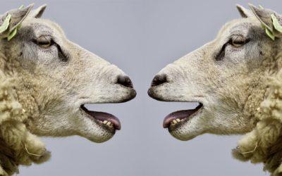 3 tips voor het stimuleren van online mond-tot-mond reclame via je medewerkers
